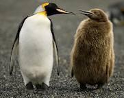 Thành ngữ và mệnh đề Tiếng Anh liên quan đến loài chim